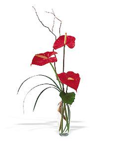 Online Bursa çiçekçi  cam yada mika Vazoda 3 adet  antoryum