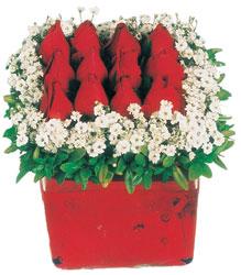 Bursa çiçek iznik çiçek online çiçek siparişi  Kare cam yada mika içinde kirmizi güller - anneler günü seçimi özel çiçek