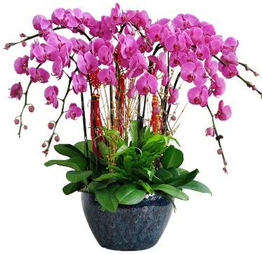 9 dallı mor orkide  Çiçekçi Bursa sitesi gemlik güvenli kaliteli hızlı çiçek