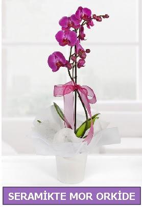 Seramik içerisinde birinci kalite tek dallı mor orkide  Bursa çiçekçiler nilüfer cicekciler , cicek siparisi