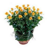 Bursa çiçek ucuz çiçek gönder  10 adet sari gül tanzim cam yada mika vazoda çiçek