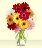 Bursa çiçek orhangazi internetten çiçek siparişi  cam yada mika vazoda 15 özel gerbera