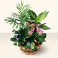 Bursa çiçekçi inegöl kaliteli taze ve ucuz çiçekler  5 adet canli çiçek sepette