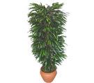 Online Bursa çiçekçi  Özel Mango 1,75 cm yüksekliginde