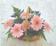 gerbera çiçeklerinde sepet   Bursa çiçek satışı iznik hediye sevgilime hediye çiçek