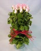 13 adet pembe gül silindirde   Bursa çiçek satışı iznik hediye sevgilime hediye çiçek