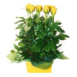 11 adet sari gül aranjmani  Bursa çiçek siparişi inegöl çiçek servisi , çiçekçi adresleri