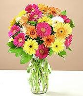 Bursa çiçekçiler orhaneli çiçekçiler  17 adet karisik gerbera