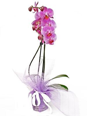 Çiçekçi Bursa sitesi nilüfer çiçek siparişi vermek  Kaliteli ithal saksida orkide