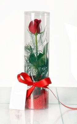 Bursa çiçek satışı iznik hediye sevgilime hediye çiçek  Silindir vazoda tek kirmizi gül