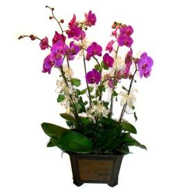 Bursadaki çiçekçiler bursaya çiçek yolla  4 adet orkide çiçegi