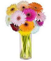 Bursadaki çiçekçi bursaya çiçek  Farkli renklerde 15 adet gerbera çiçegi