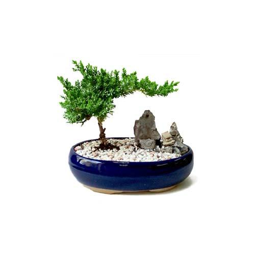 ithal bonsai saksi çiçegi  Bursa çiçek iznik çiçek online çiçek siparişi