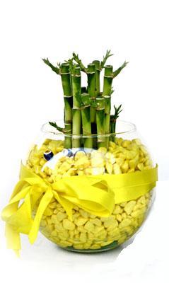 cam fanus içerisinde bambo  Bursa çiçek siparişi