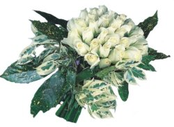 Bursadaki çiçekçi bursaya çiçek  9 Beyaz gül Özel kisiler için
