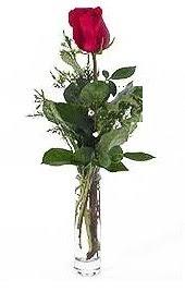 Vazo içerisinde 1 adet kirmizi gül  Bursa çiçek ucuz çiçek gönder