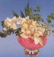 Bursa çiçek mustafa kemal paşa çiçek siparişi sitesi  Dal orkide kalite bir hediye