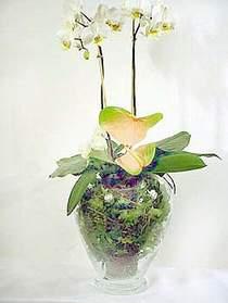 Bursa çiçekçi inegöl kaliteli taze ve ucuz çiçekler  Cam yada mika vazoda özel orkideler