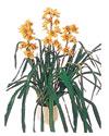Çiçekçi bursa çiçek firması  Orchiede ithal büyük boy saksi