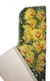 Bursa çiçek iznik çiçek online çiçek siparişi  Kutu içerisine dal cymbidium orkide