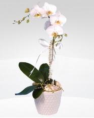 1 dallı orkide saksı çiçeği  Bursa çiçek siparişi inegöl çiçek servisi , çiçekçi adresleri