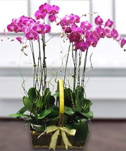 4 dallı mor orkide  Bursa çiçek kestel uluslararası çiçek gönderme