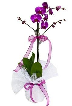 Tek dallı mor orkide  Çiçekçi Bursa sitesi inegöl çiçek mağazası , çiçekçi adresleri