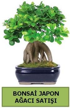 Bonsai japon ağacı satışı  Bursa çiçekçi inegöl kaliteli taze ve ucuz çiçekler
