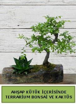 Ahşap kütük bonsai kaktüs teraryum  Bursadaki çiçekçi bursaya çiçek