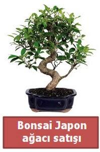 Japon ağacı bonsai satışı  Online Bursa çiçekçi