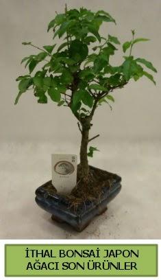 İthal bonsai japon ağacı bitkisi  Bursadaki çiçek cicek , cicekci