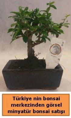 Japon ağacı bonsai satışı ithal görsel  Bursa çiçek satışı iznik hediye sevgilime hediye çiçek