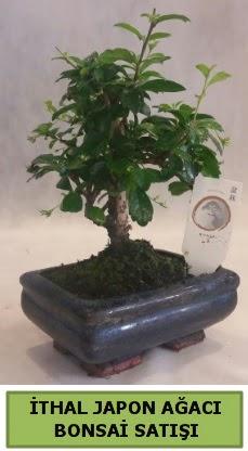 İthal japon ağacı bonsai bitkisi satışı  Çiçekçi Bursa sitesi inegöl çiçek mağazası , çiçekçi adresleri