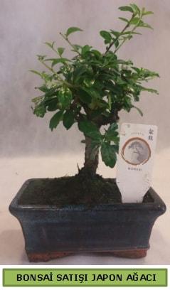 Minyatür bonsai ağacı satışı  Bursa çiçek iznik çiçek online çiçek siparişi
