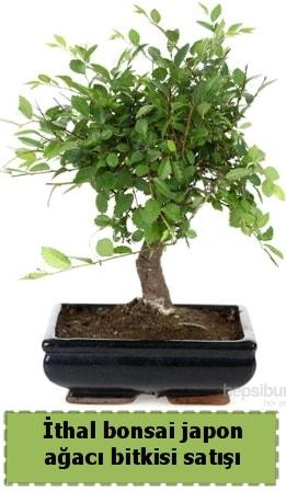 İthal bonsai saksı çiçeği Japon ağacı satışı  Bursa çiçekçiler nilüfer cicekciler , cicek siparisi