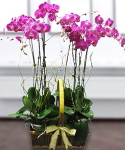 7 dallı mor lila orkide  Çiçekçi Bursa sitesi nilüfer anneler günü çiçek yolla
