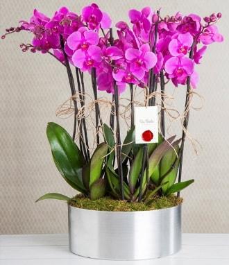 11 dallı mor orkide metal vazoda  Çiçekçi Bursa sitesi nilüfer anneler günü çiçek yolla