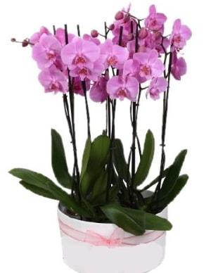 Beyaz seramik içerisinde 7 dallı mor orkide  Çiçekçi Bursa sitesi inegöl çiçek mağazası , çiçekçi adresleri