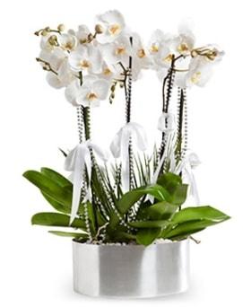 Beş dallı metal saksıda beyaz orkide  Bursa çiçek satışı iznik hediye sevgilime hediye çiçek