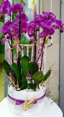 Seramik vazoda 4 dallı mor lila orkide  Çiçekçi Bursa sitesi orhangazi çiçek satışı