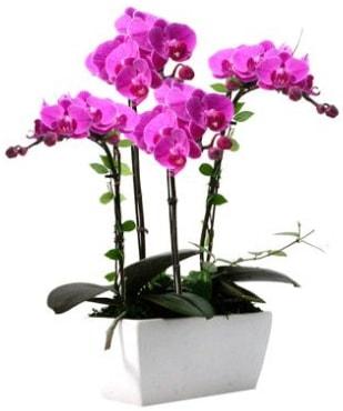Seramik vazo içerisinde 4 dallı mor orkide  Bursa çiçekçi inegöl kaliteli taze ve ucuz çiçekler