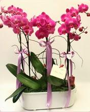 Beyaz seramik içerisinde 4 dallı orkide  Bursa çiçek yolla osmangazi online çiçekçi , çiçek siparişi