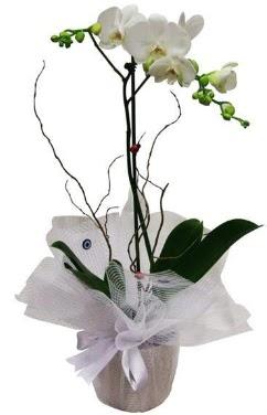 Tek dallı beyaz orkide  Bursadaki çiçekçiler bursaya çiçek yolla