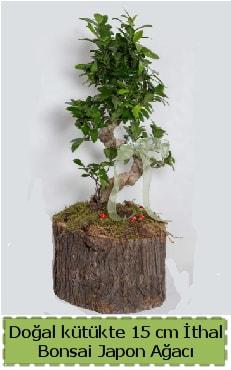 Doğal kütükte İthal bonsai japon ağacı  Bursa çiçek iznik çiçek online çiçek siparişi