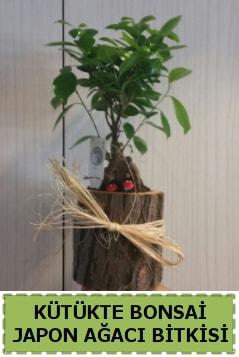 Kütük içerisinde doğal bonsai ağacı  Çiçekçi Bursa sitesi inegöl çiçek mağazası , çiçekçi adresleri