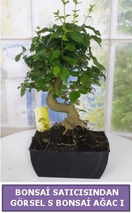 S dal eğriliği bonsai japon ağacı  Bursa çiçekçi inegöl kaliteli taze ve ucuz çiçekler