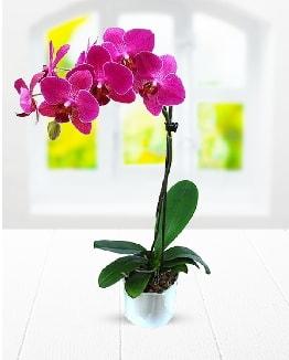 Tek dallı mor orkide  Bursa çiçekçi inegöl kaliteli taze ve ucuz çiçekler
