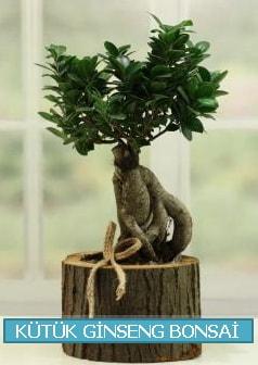 Kütük ağaç içerisinde ginseng bonsai  Çiçekçi Bursa sitesi nilüfer anneler günü çiçek yolla