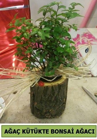Doğal ağaç kütük içerisinde bonsai ağacı  Çiçekçi Bursa sitesi nilüfer anneler günü çiçek yolla