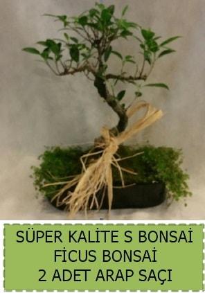Ficus S Bonsai ve arap saçı  Çiçekçi Bursa sitesi inegöl çiçek mağazası , çiçekçi adresleri